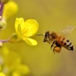 髪を花粉から守る!- 対策 –
