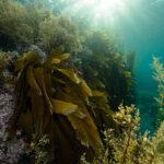 海藻は髪を健康にする『事実』!?